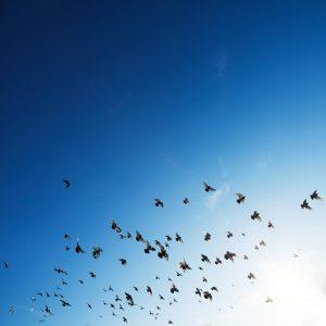 Birds That Flock Together